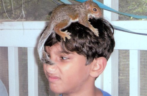 There\'s a wild squirrel on Jesse\'s head